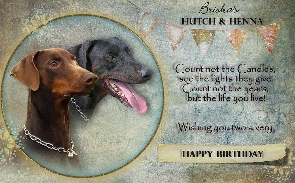 Congratulations Henna & Hutch